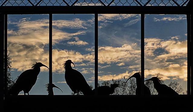 IMG_9915+16+06 sunset ibis