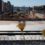 Plant on the highline