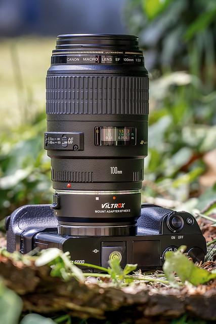 SONY ⍺6000 & Canon EF100mm ƒ/2.8 Macro USM on Viltrox Mount Adapter EF-NEX II AF