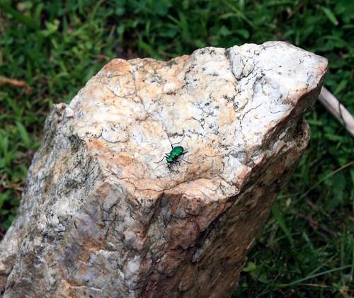 very green bug | by susanlee828