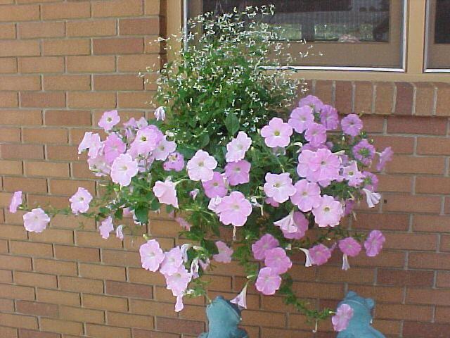 Klaus Misty Lilac Wave Petunia Hanging Basket Klaus Wi Flickr