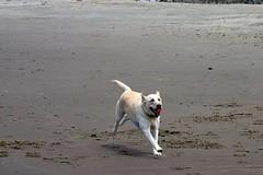 Zephyr Running on the Beach | by ahockley