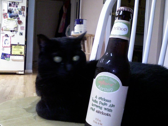 Dogfish Head Aprihop and Booker T Kitty
