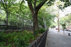 tompkins square park tree | by neatnessdotcom