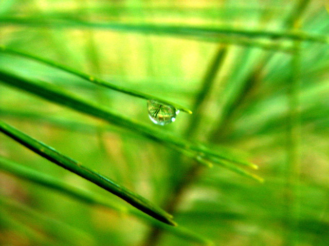 Reflection of a Green world in a Drop
