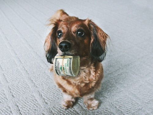 Cute Dog with Money | by ota_photos