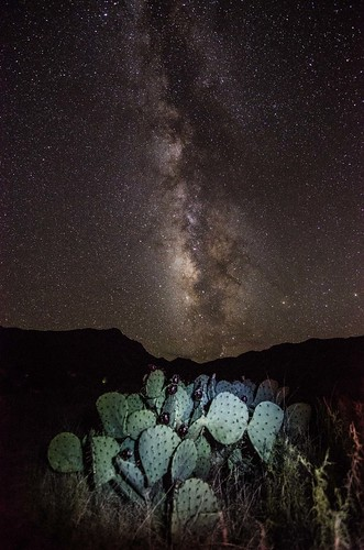 Milky Way Cacti | by TheReilDeal