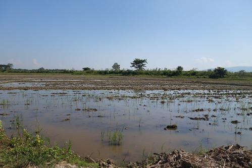 Fahrradtour - Reisfeld ohne Reis