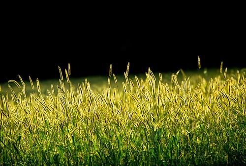 landscapeflowers