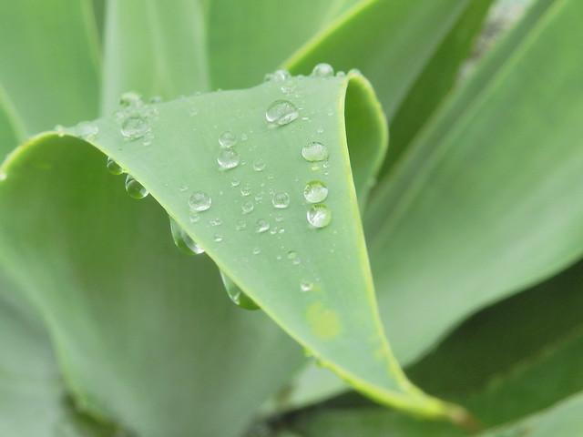 Gotas de chuva 2