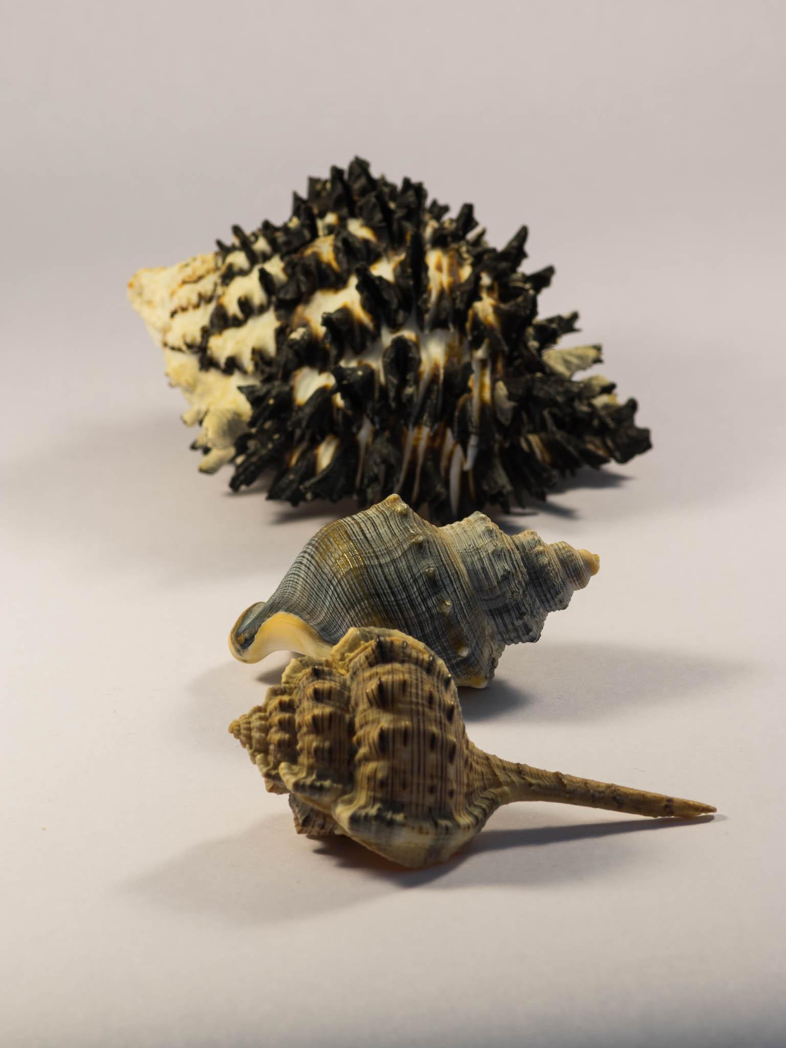 Shells study