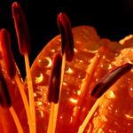 Orange Jewels