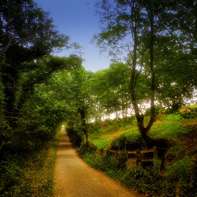 On the path to St. Ann's Head near Dale, Wales