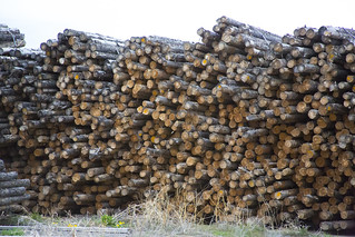 logs ET5A3073 | by Intermountain Region US Forest Service