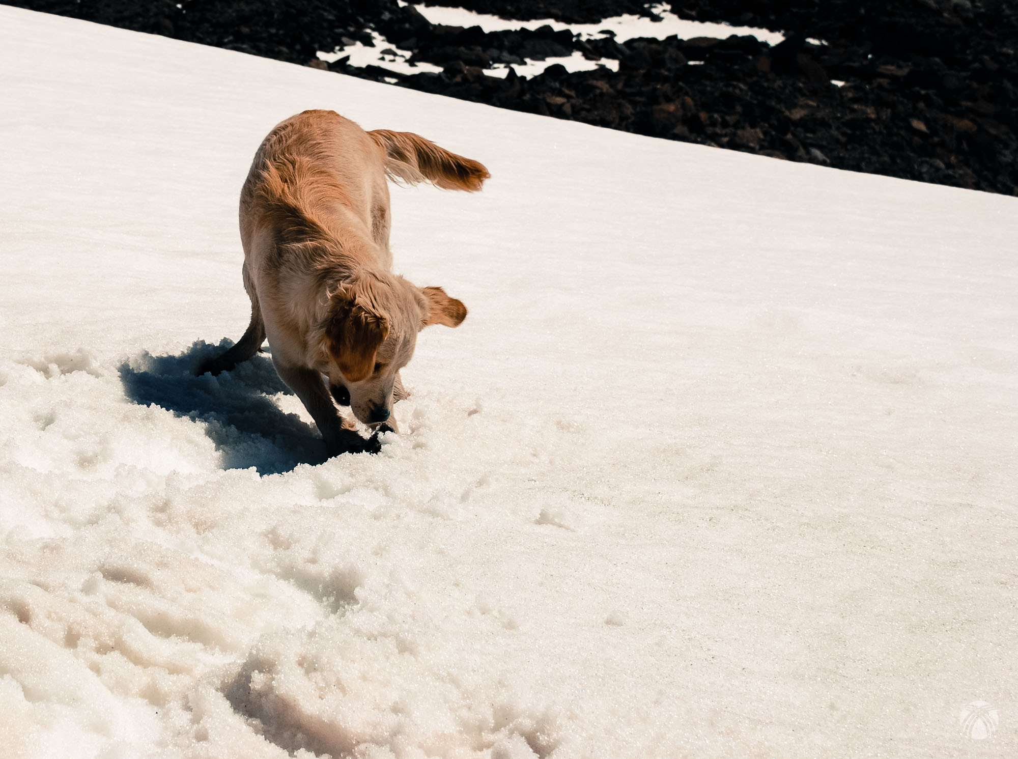 Los primeros encuentros de Moss con la nieve