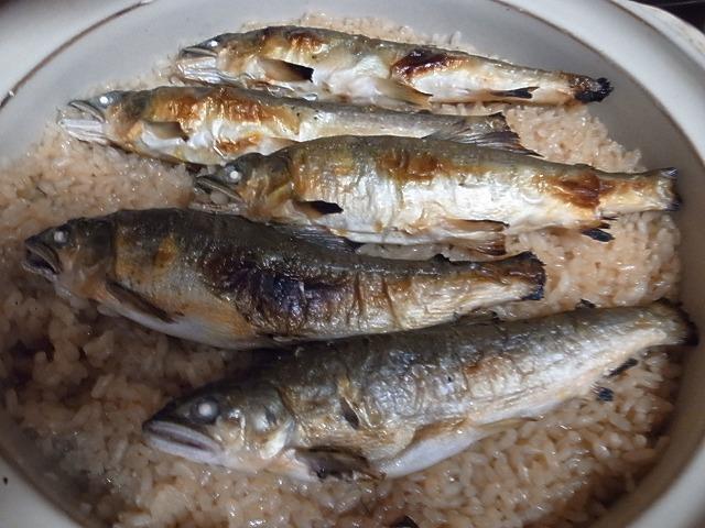 <p>c)5合の鮎ごはんが炊き上がりました。<br /> これから、頭と骨を取り除き、ご飯と混ぜていただきます。</p>