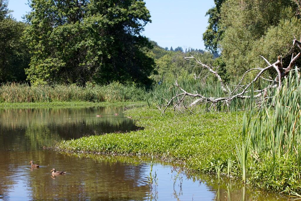 The Pond At Jericho Park