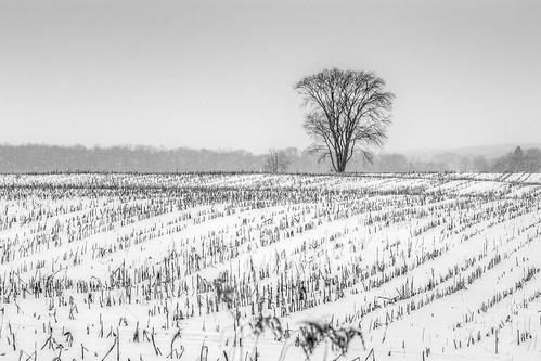 winter bw snow cold tree field weather canon landscape cornfield day pennsylvania farm pa flurries snowing westernpennsylvania westernpa lawrencecounty 60d pwwinter