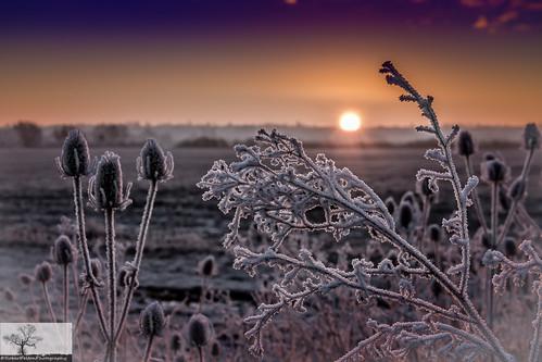 winter light sky cloud sun silhouette skyline skyscape bedford frost bedfordshire teasel felton frosted cardington robertfelton