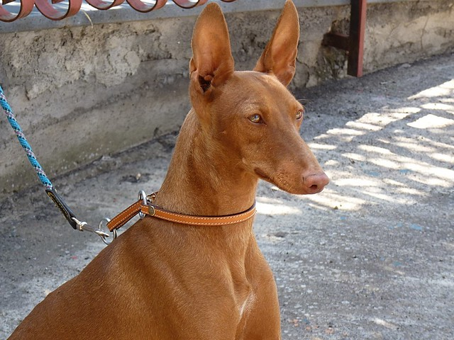 Ragalna (Ct) - Birba