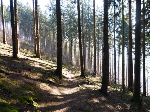 trekking germany deutschland hiking natur trail ww wandern rheinlandpfalz wanderweg 2014 westerwald wanderwege fernwanderweg weitwanderweg maerzbecher druidensteig deutschlandzufus deutschlandzufuss