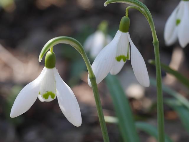 火, 2014-04-01 13:18 - Brooklyn Botanic Garden