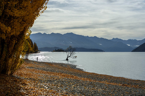 autumn trees newzealand sky people mountains water leaves clouds view stones scene autumncolours southisland centralotago wanaka lakewanaka tripdownsouth wanakasfamoustree