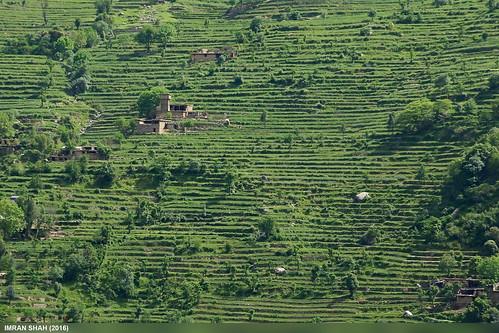 trees pakistan mountains building landscape structures location elements vegetation fields greenery tele settlement kohistan kpk dubair