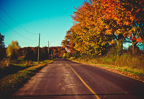 autumn road | by Shandi-lee