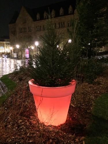 Gare small tree