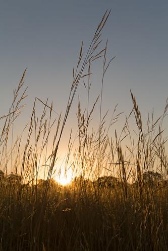 australia melbourne greenvale woodlandshistoricpark