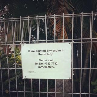 Ssssssnake #singapore #hot #phobia | by Www.GetlostinAsia.com