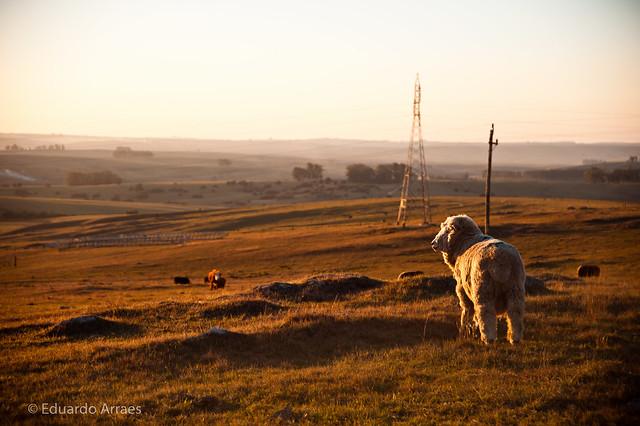 Reflexive Sheep