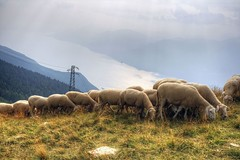 Mandria di Lago di Garda