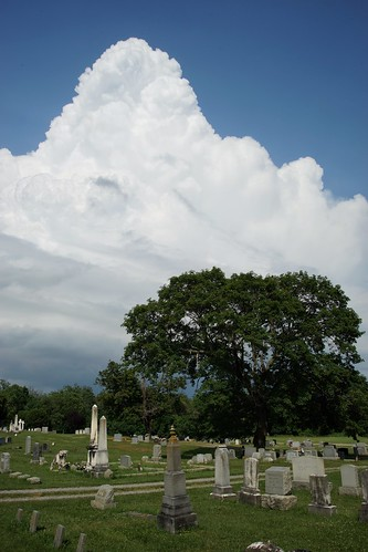storm tree cemetery graveyard
