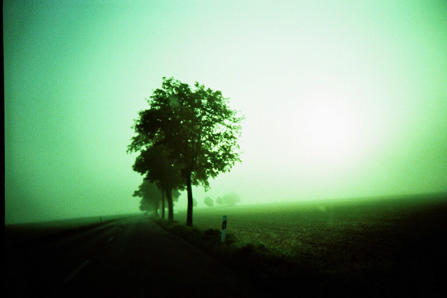 the path of many trees, sometimes fog
