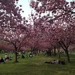 BK Botanic Gardens