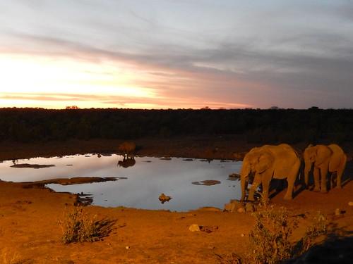 Etosha NP - olifanten en neushoorns in de avond