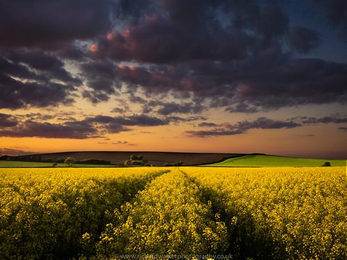sunset sky field clouds barn landscape oilseedrape landscapephotography