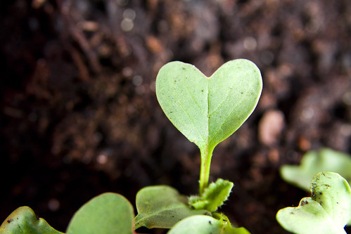 Green heart plant sprouting in garden | by Vegan Photo