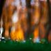 Little Fairies by lichtmaedel