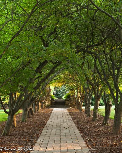 sunrise garden northcarolina winstonsalem graylyninternationalconferencecenter
