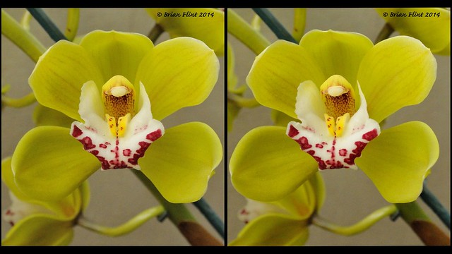 Orchid - 3d parallel view