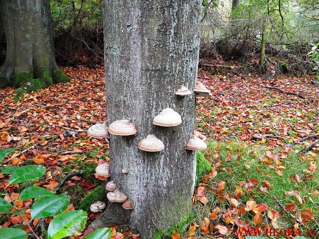 20-10-2012     Wedeblick-   Driebergen        25 Km (107)
