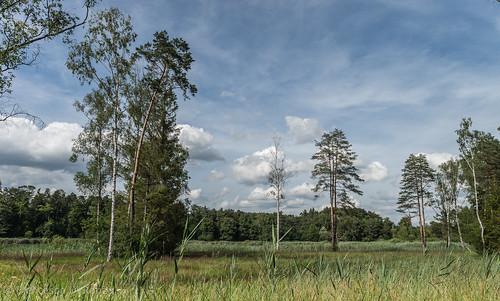 trees sky plant nature clouds landscape schweiz see outdoor sony natur pflanzen himmel wolken zürich tamron landschaft bäume ch imfreien ossingen husemersee slta99v tamronsp2470mmf28diusd lightroomcc ossingenzh