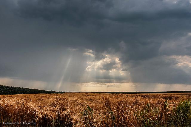 Nevena Uzurov - Rainy Summer