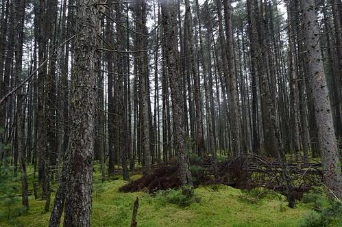 county lake wisconsin forest star highlands state demonstration northern vilas sphagnum blackspruce