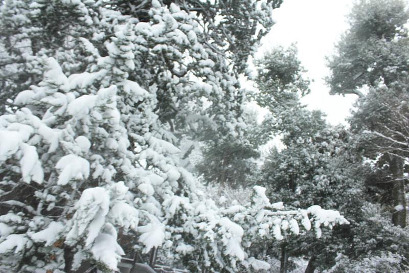 雪の鎌倉_24