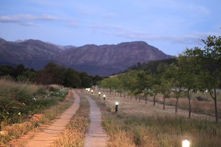 Wine Country - South Africa - 87 | by leyla.a