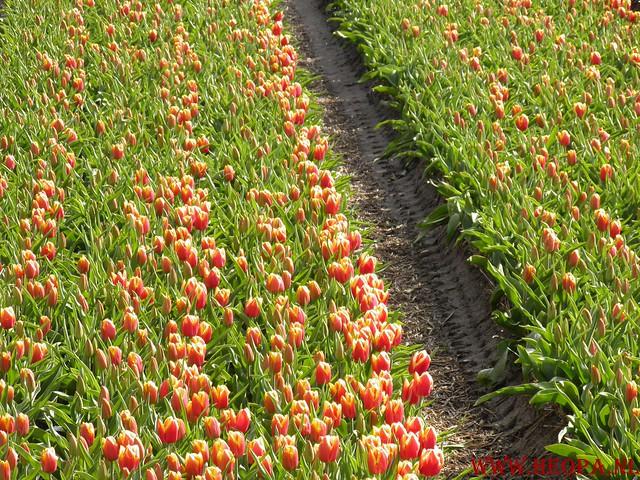 Castricum 15-04-2012 26 Km (38)